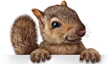 Eichhörnchen-Ratgeber